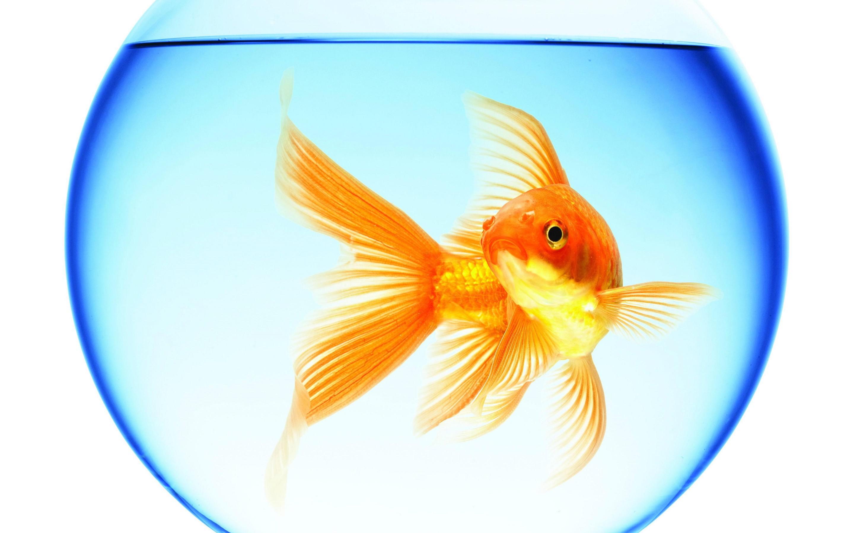 Você vive dentro de um aquário?